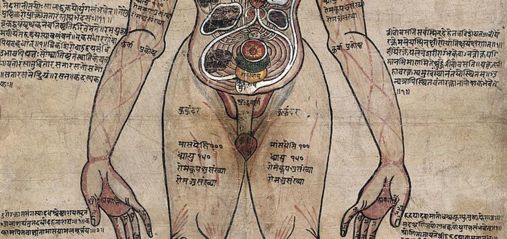 The Ayurvedic Man - Drawing